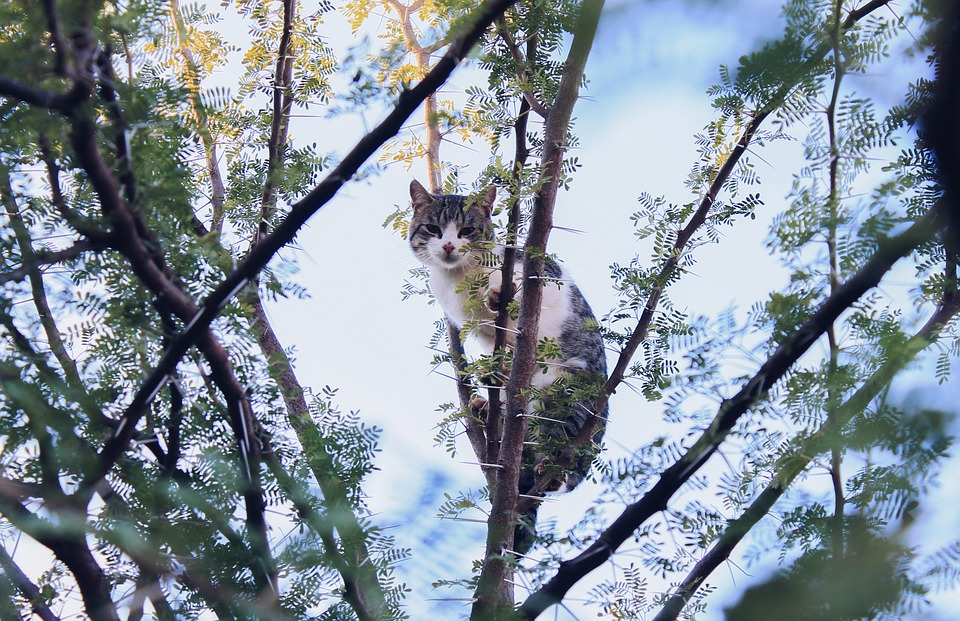 Photo of a cat in a tree
